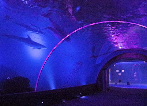 ピンク色にライトアップされた水族館